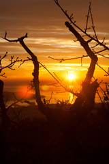 silhouette of a branch at sunset