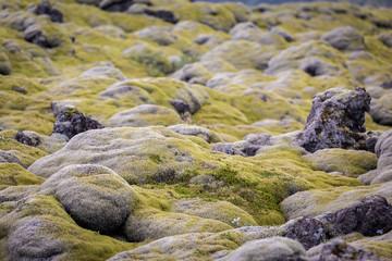 Iceland, moss musk landscape, wild nature
