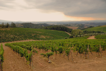 Storm approaching the Summer Vineyard