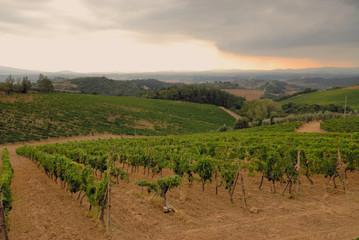 Storm approaching the Summer Vineyard