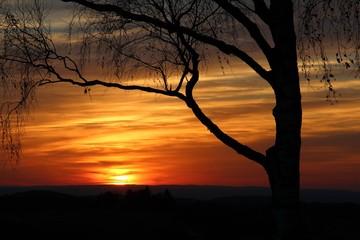 Baumsilhouette bei Sonnenuntergang