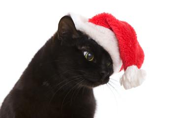 Black Cat Santa - cute christmas cat, Christmas pet with Santa C