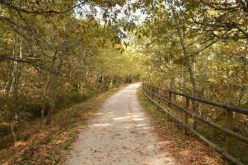 via verde en burgos, ferrocarril minero