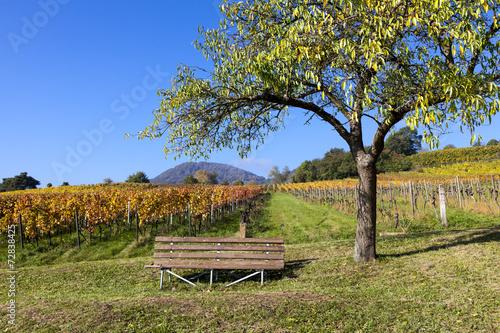 canvas print picture Herbst in den Weinbergen bei Birkweiler