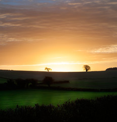 Rural morning sunrise over fields