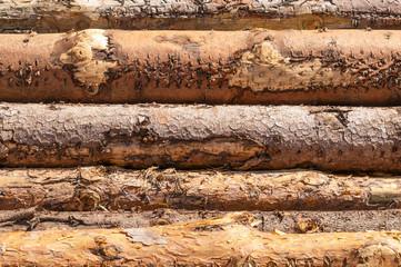 Kiefernholz, Holzindustrie, Festmeter