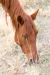 horses eat grass