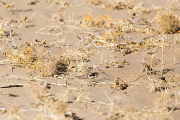 plants in the sand in the desert