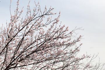beautiful flowers on a tree. macro