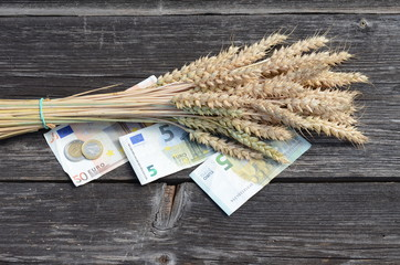 wheat  ears bunch with euro money banknotes isolated