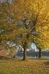 Autumn colors in Blue Lake park Oregon.