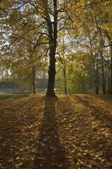 Autumn landscape in a park.