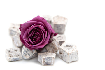 rose pourpre violette