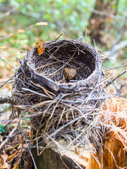 Nest in forest