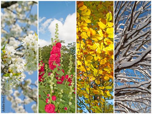 Papiers peints Cerises Vier Jahreszeiten