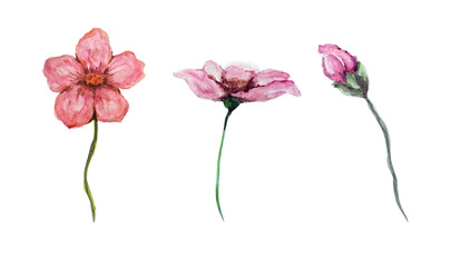 watercolor flowers