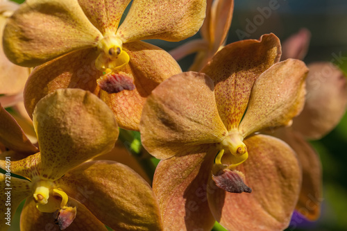 Aluminium Orchidee Yellow-brown orchid