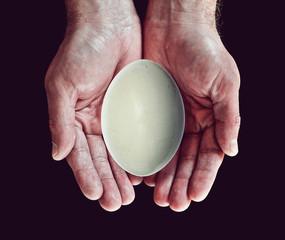 bird egg in hands