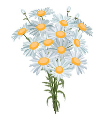 White realistic daisies isolated