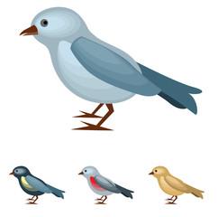 Bird on white background.