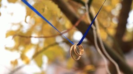 Two wedding rings on a blue ribbon on a tree
