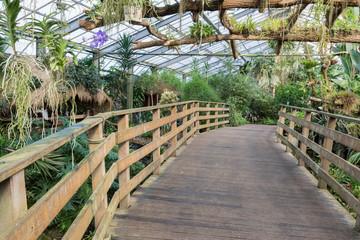 Wooden bridge in a Dutch greenhouse with tropical garden