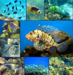 Red Sea coral fish set