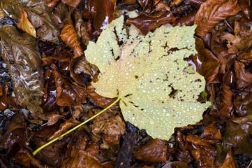 Autunno foglie e pioggia