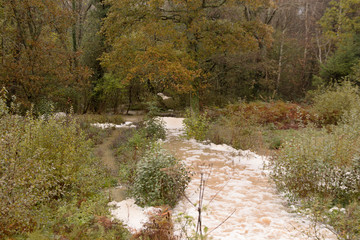 Foam on water flooding through Susssex woodland
