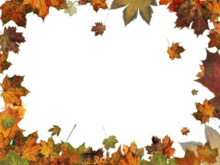 autumn leaves frame border illustration isolated