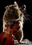 degu mouse playing cello
