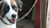 Hyperactive mutt dog portrait poster