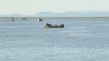 Fraser River Gillnetters Pulling Salmon On Board