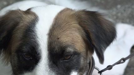 Hyperactive mutt dog portrait