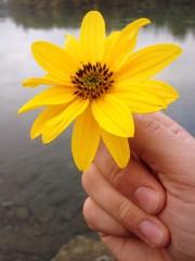 fiore in mano, flower in hand