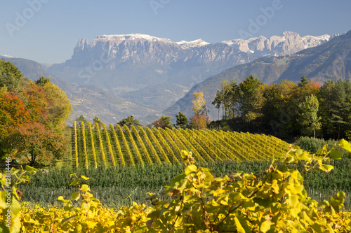 Papiers peints Vignoble Herbst in Südtirol