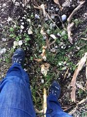 Füße auf dem Stoppelfeld