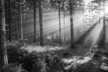sun and fog in a forest