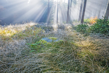 dewy grass in the morning forest