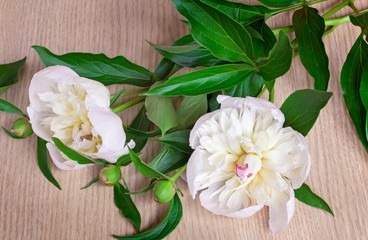 Still life: two white peony on the surface of the table.