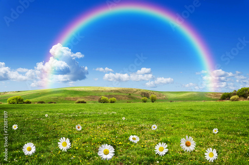 Staande foto Weide, Moeras rainbow background