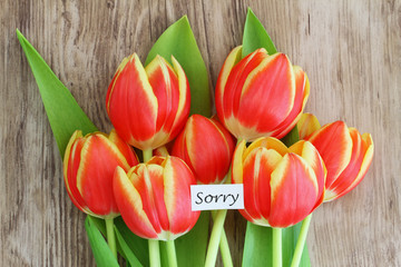 Sorry card with red and yellow tulips