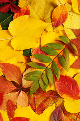 yellow and red leaves