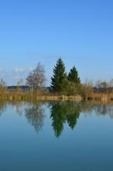 Tannenbäume spiegeln sich im See
