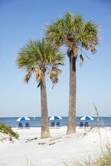Sea beach and Palm trees Florida coast