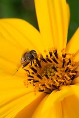 heverfly