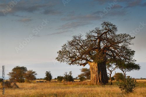 Foto Spatwand Baobab African landscape