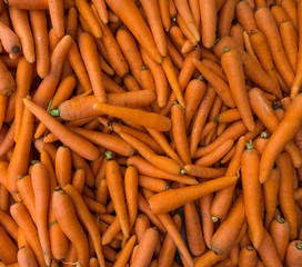 carrot background.   Raw fresh carrots close up.