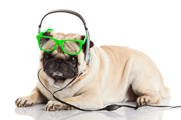 dog with headphones.