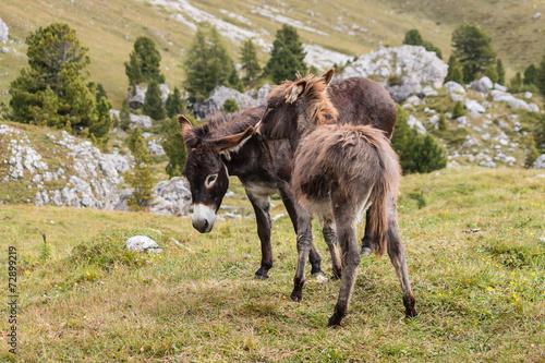 Poster Ezel grooming donkeys